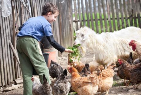 Kinder haben Spaß mit den Tieren am Bauernhof.