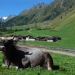 Sommerurlaub unserer Tiere