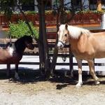 pferdklein